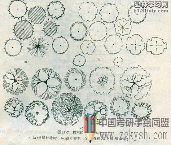乔木灌木的表现手绘图