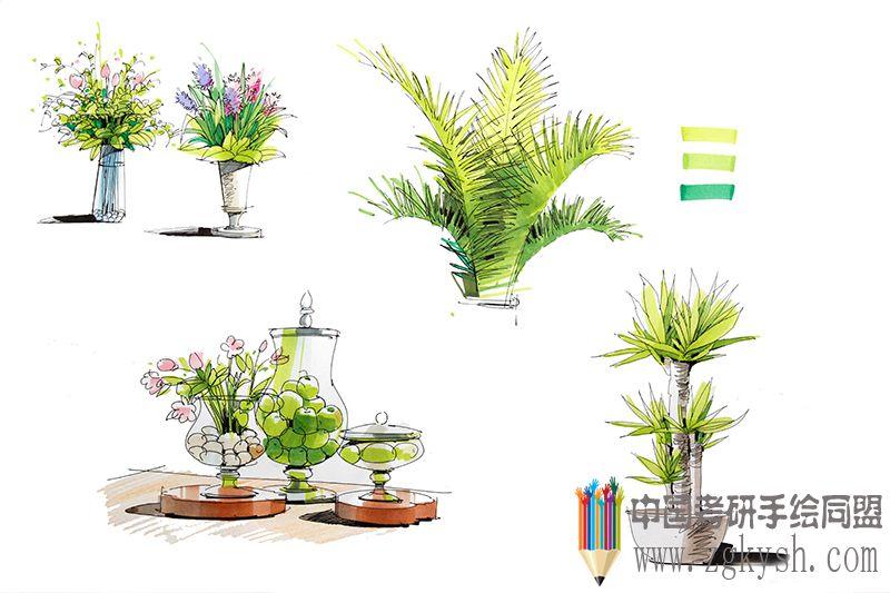 [景观] 2013邓蒲兵手绘植物马克笔表现
