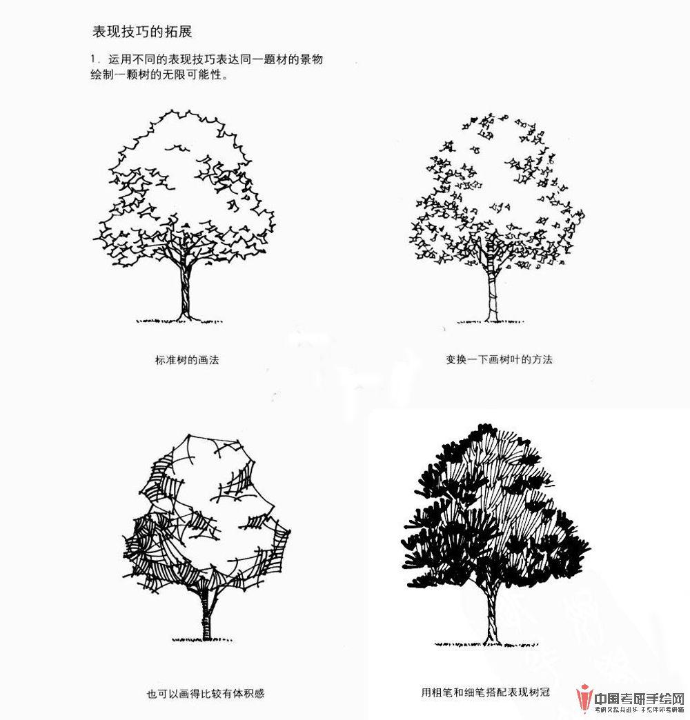 手绘论坛 69 手绘效果图 69 园林景观手绘 69 手绘植物单体线稿