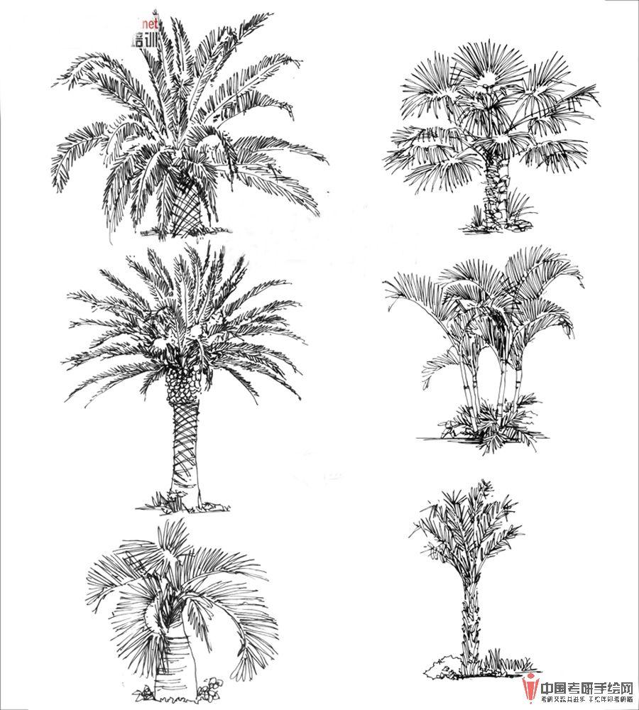 手绘风景西安植物园 手绘 风景 花架 景观亭 西安植物