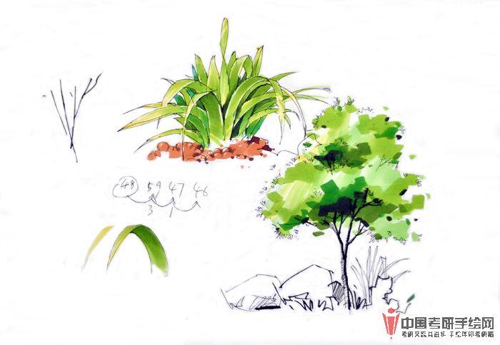 景观植物单体 材质 马克笔表现手绘效果图