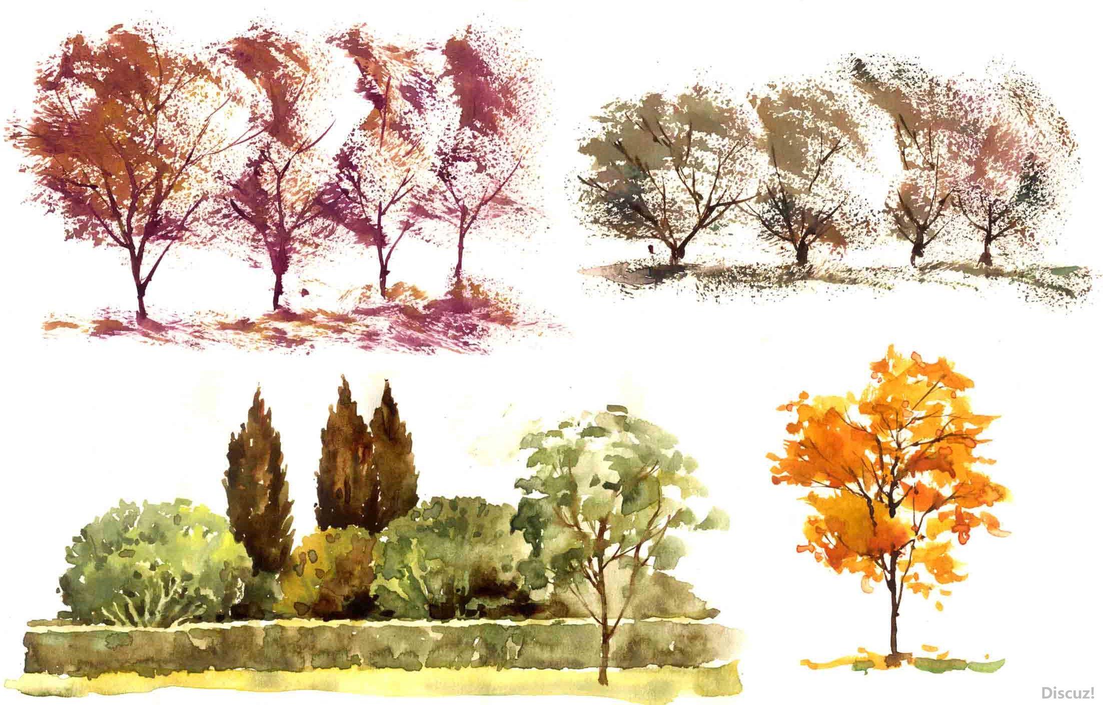 园林景观植物树木水彩画法作品案例手绘效果图