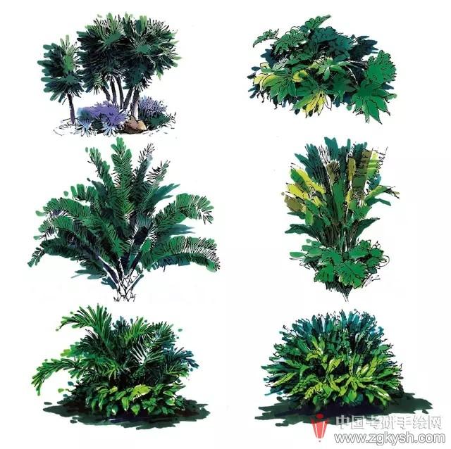 室外马克笔手绘图植物